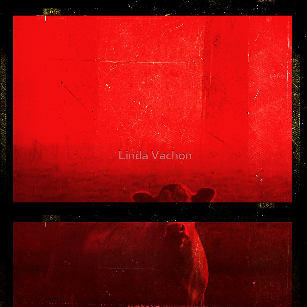 anonyme by linda vachon