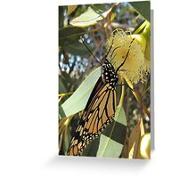 MONARCH IN HEAVEN! now gum flowers opening. Greeting Card
