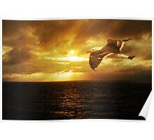 Dawn, Cape Du Couedic. K.I. Poster