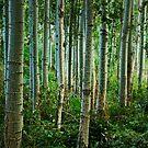 Enchanted Forest In Green: Malatya, Turkey by Josh Wentz
