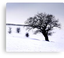 snow landscape Canvas Print