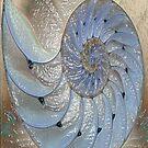 Nautilis by Dick  Iacovello