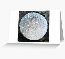 Puffball  Up close. Greeting Card