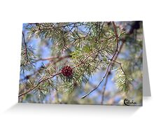 SPRING PINECONE  3-20-10 Greeting Card