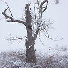 Dead Winter by Dalton Sayre