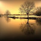 Golden Winter Glow by Kate Towers IPA