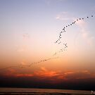 And they all fly away one day by Bumchkin