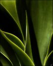 Agave by Chris Lord