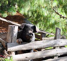pig in pigpeg by hebeluna