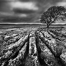Malham Limestone Pavement - Yorkshire Dales by Ian Snowdon /     www.downtoearthimages.co.uk