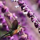 Hummingbird by Anne-Marie Bokslag