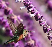 Hummingbird by Anne-Marie Bokslag
