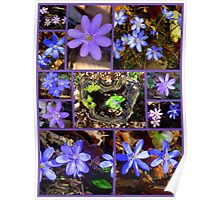 Hepatica Collection Poster