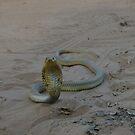 Snouted Cobra nr 2 by Riaan van der Merwe