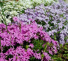 Spring Flowers by Christina Spiegeland