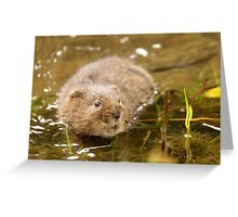 water vole Greeting Card