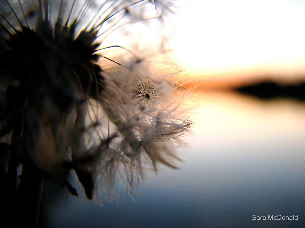 fluff by Sara McDonald
