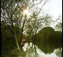 Sunny pond. by Claire Sidebotham