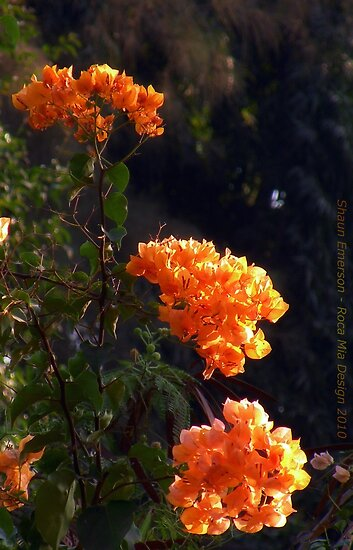 Exotic Orange Flowers by rocamiadesign