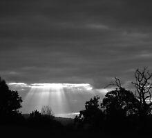 Dugandan Rays by Stecar