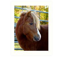 Miniature Horse Portrait Art Print
