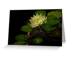 Golden Waterlily Greeting Card