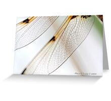 Four-spotted Chaser wings, Libellula quadrimaculata Greeting Card