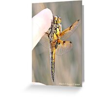 Four-spotted Chaser wings, Libellula quadrimaculata on photographer's finger Greeting Card