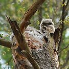 Great horned; the next generation by Heather King