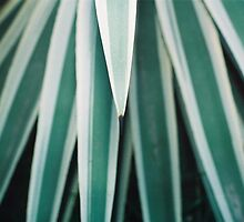 Genus of Love - Aloe Vera type plant by QuantumRebel
