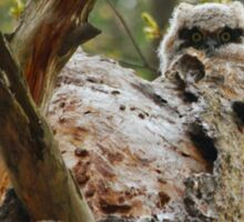 Great horned; the next generation Sticker