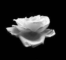 Floating Rose by DeeCarmack