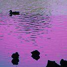Purple Reflections by vigor