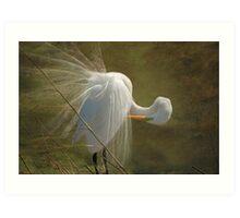 Avery Island Egrets--Preening Time 2 Art Print