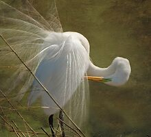 Avery Island Egrets--Preening Time 2 by Bonnie T.  Barry