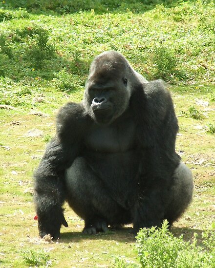 Smug Gorilla by Malky-C