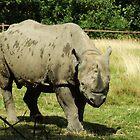 Rhinoceros by Malky-C