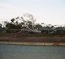 storm damage by waynepearce