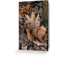 Frosty Leaves  Greeting Card