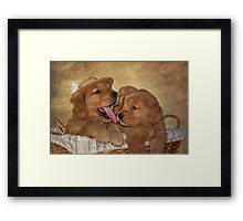 Little Licker Framed Print