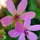 Blooming Weed by Sandra Moore