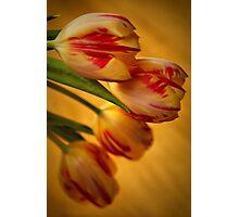 Tulip Lights Photographic Print
