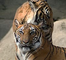 Malayan Tiger Mother and Child by Kathy Newton