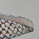conchiglia 'shell detail' © 2010 patricia vannucci by PERUGINA
