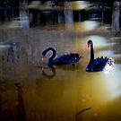 a swan dance... by wildwomenlove