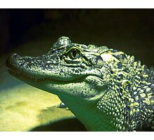 Alligator Photographic Print
