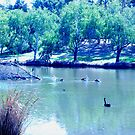 pelican junction... by wildwomenlove