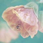 Beloved Dream by AnnieD