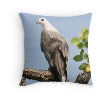 White-bellied Sea-Eagle (Haliaeetus leucogaster) Throw Pillow