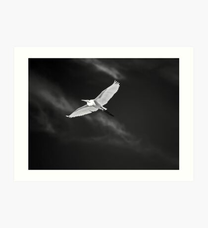 White Flight Art Print